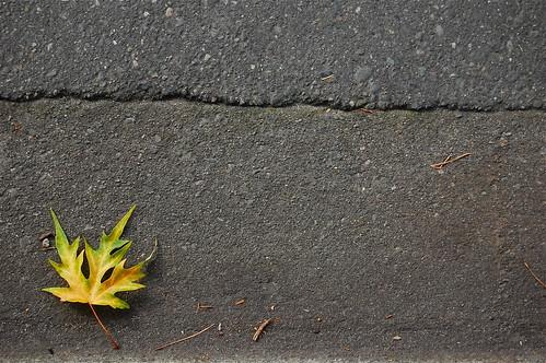 pavement :: 1