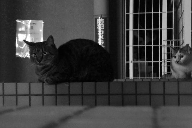 Today's Cat@2011-10-19