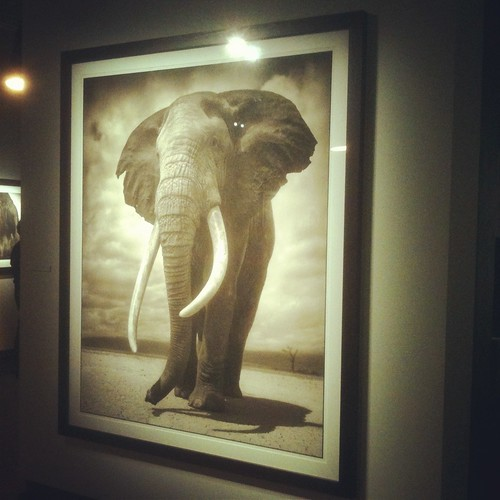 nick brandt at fotografiska