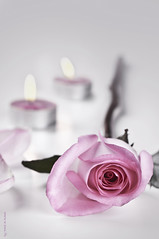 Candles & rose (Fahad Al-Robah) Tags: rose petals candles      rose