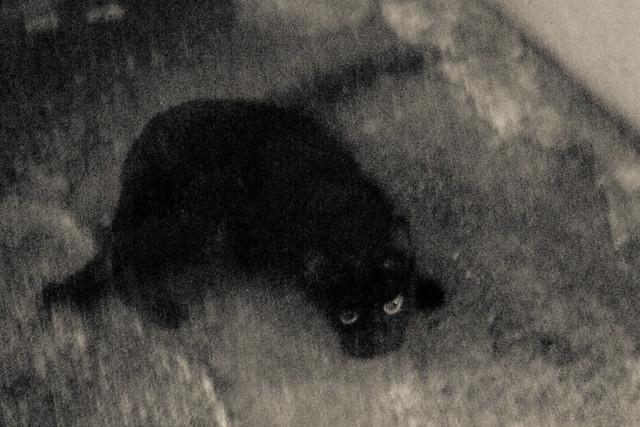 Today's Cat@2011-09-13