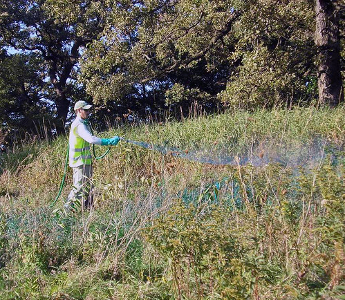 City of Elgin crews treat invasive species around streets, parks, cemeteries, and golf courses.