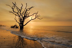 Tied in Knots (Mark VanDyke Photography) Tags: botanybay botanybayplantationwildlifepreserve boneyard boneyardbeach beach shore waves tree silhouette sunrise lowcountry southcarolina charleston edistoisland