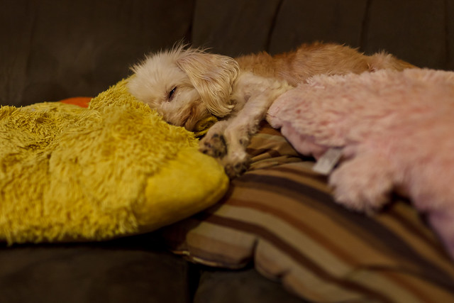 253/365 - September 10, 2011 - Asleep on Pillow Mountain