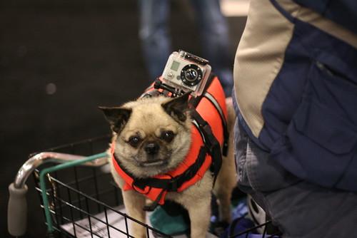 GoPro doggie cam