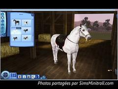 horse0002_1