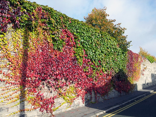 Ivy Fall Wall