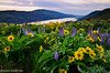 Mountain On My Mind (cascade creations) Tags: sunrise lupine columbiarivergorge balsamroot rowenaplateau tommccallpreserve