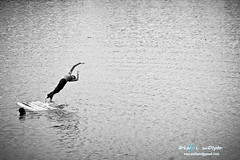 The joy of freedom (Kazi Sudipto) Tags: life boy people bw white black canon river children freedom is jump expression joy bangladesh efs swiming 550d 55250 maowa kazisudiptophotography gettyimagesbangladeshq12012
