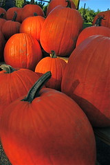 pumpkins (Kadeefoto) Tags: fall shelburnefarm farm massachusetts pumpkins applepicking stowema