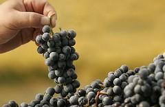 Cinco vinos de varietales raros para los que busquen sabores alternativos