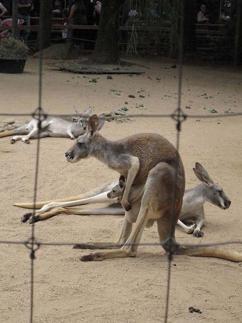 Zoo 0122