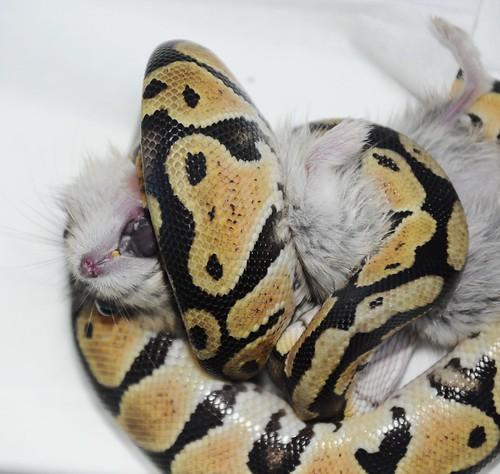 Flickriver: Random photos from Snake Bite pool