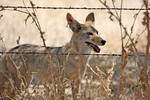 1coyote dave harper oakley