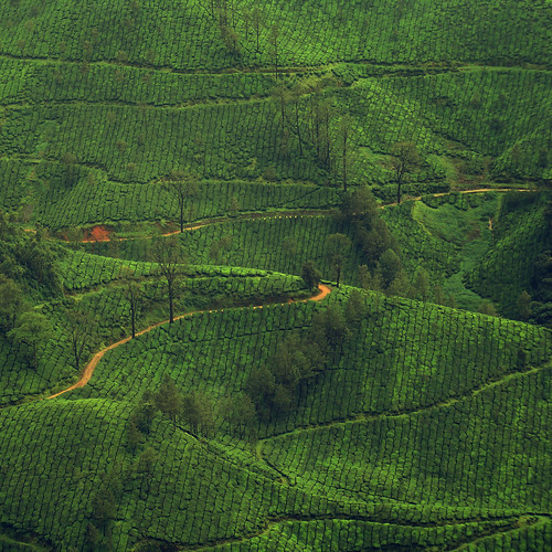 [フリー画像] 自然・風景, 田畑・農場, 丘, グリーン, インド, 201109281300