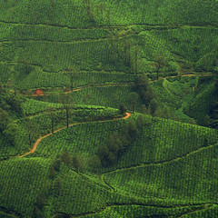 country roads (aphotoshooter) Tags: india kerala hills aps countryroad munnar windingroad teagardens idukki concordians aphotoshooter
