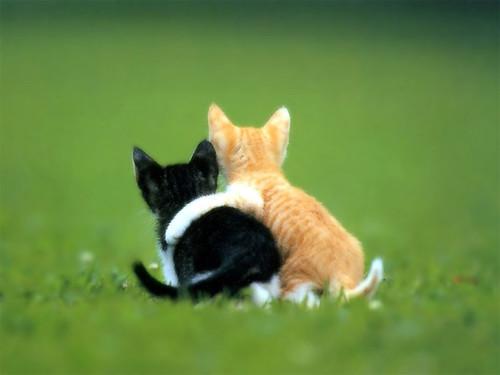 ♥♥♥ Porque ter amigos é bom... um belo domingo para vocês! by sweetfelt \ ideias em feltro