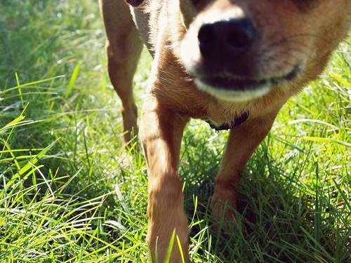 a sunny walk : Grace's nose
