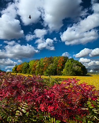 Peace of Mind (Phil~Koch) Tags: morning flowers blue autumn trees sunset red summer sun color green fall love floral field vertical wisconsin clouds sunrise photography landscapes spring twilight peace earth farm natur scenic meadow inspired award naturallight farmland serene agriculture inspirational breathtaking horizons environement flickraward photocontesttnc11 philkoch myhorizonart
