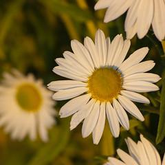 BuGa 2011 (Q-BEE) Tags: flowers fleurs blumen koblenz buga bundesgartenschau gartenschau artistoftheyearlevel3 artistoftheyearlevel4