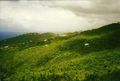 The Green Rolling Hills (pam's pics-) Tags: sea green film hills jungle 1997 lush stthomas virginislands filmscan usvirginislands pammorris pamspics nocluewhatcameraiused