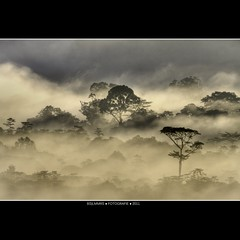 Malaysia: Morning jungle beauty [Explored] (Bas Lammers) Tags: cloud mist tree beauty sunrise hill miri jungle malaysia magical mulu softtones canon50d mygearandme mygearandmepremium mygearandmebronze mygearandmesilver mygearandmegold mygearandmeplatinum mygearandmediamond
