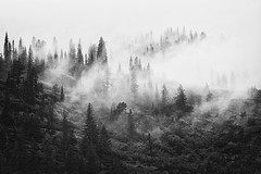 through the mist the forests rise (posthumus_cake (www.pinnaclephotography.net)) Tags: park blackandwhite bw cloud mist mountain tree nature monochrome fog forest canon landscape eos mono blackwhite nationalpark montana moody mt outdoor monotone glacier telephoto evergreen alpine l 5d glaciernationalpark tones ef 70200mm goingtothesunroad canoneos5d 70200l canonef70200mmf4lusm