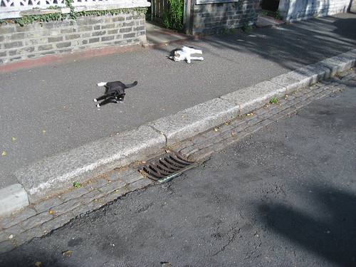 Sunbathing cats down our street