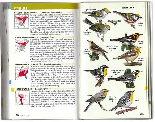 Kaufman Warblers