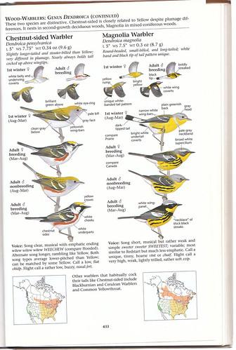 Sibley Warblers