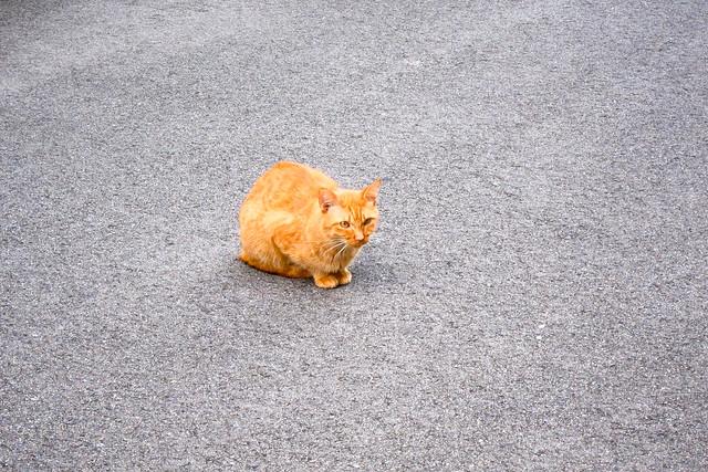 Today's Cat@2011-09-29