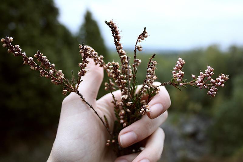 var i skogen och plockade ljung...... neee fotade