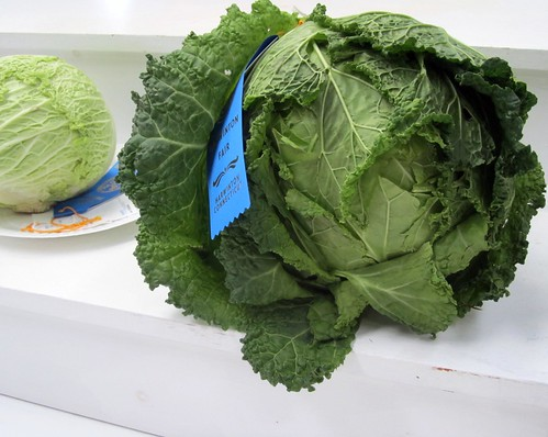 Prize-Winning Cabbage