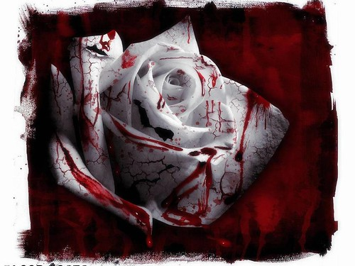 beauty-pain and white-rose