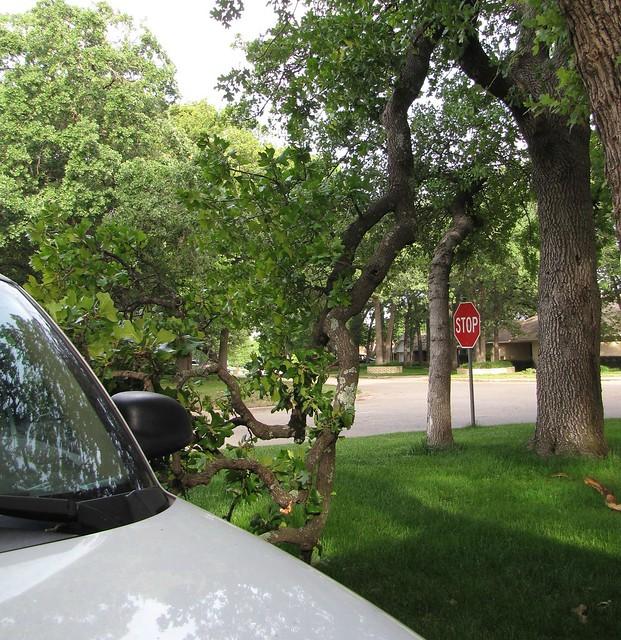 Tree Near Car 4