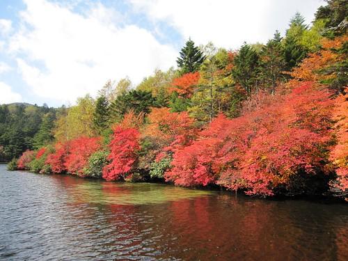 白駒池の紅葉/青苔荘西側 2011年10月7日 by Poran111