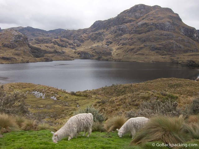 Glacially-formed lagoons dot the high-altitude landscape of El Cajas National Park.