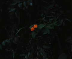 ([Yi.]) Tags: color mamiya nature project peaceful rz67 wildl holycreationsofnature