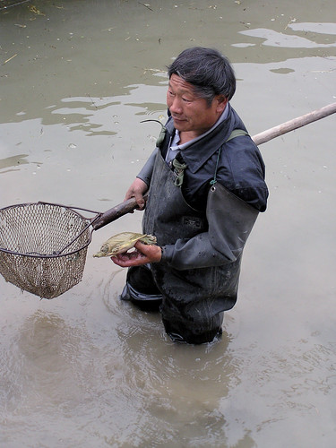 Aquaculture in Henan, China. Photo by Kam Suan Pheng, 2008
