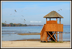 Lifeguard Lookout #304 (mjsfotoart) Tags: blue autumn red wild sky orange brown seagulls lake color reflection tree green bird fall beach water colors up leaves birds yellow mi gold grey golden fly stand leaf sand colorful branch peace michigan branches sandy flock gray flight tan peaceful tranquility lifeguard lookout lakemichigan hut bark trunk ripples canopy desolate treetop menominee uppermichigan mjsfotoart markjseefeldt hennespark