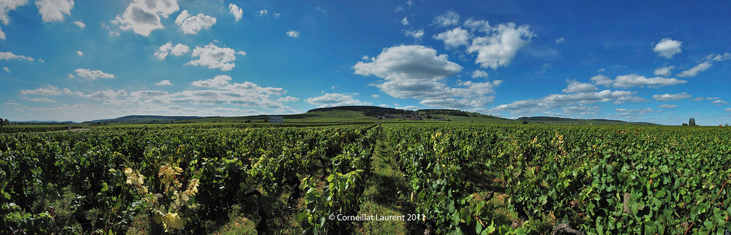 Volnay Vendanges 2011