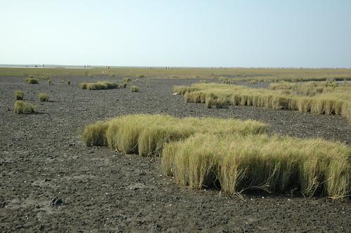 特生中心在高美溼地依照底質條件及植被選擇4個樣站進行研究。(攝影者:李璟泓)