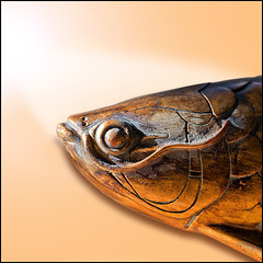 ICHTUS (ESOX LUCIUS) Tags: fish holland taco woodcarving arapaima ichtus