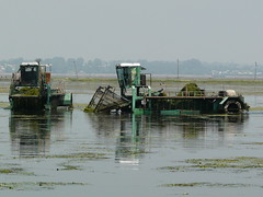 Clearing Dal Lake of it's prolific submerged fauna (varunshiv) Tags: kashmir srinagar dallake