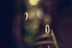 :) (seyed mostafa zamani) Tags: life city light sunset plant color macro love nature photography dance colorful iran general bokeh background games romance east boke         coquetry     marand          drama