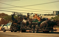 Tiger Transport (garlandcannon) Tags: sculpture truck texas tiger statues wires faux elpasotexas notsomethingyouseeeveryday animalsculpture