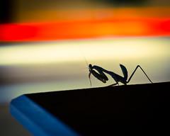 In the Shadows (Truebritgal) Tags: orange white car silhouette wall night dark mantis insect nikon long exposure tripod praying cyprus headlights nighttime nikkor prayingmantis larnaca 50mmf18 6secs d7000 truebritgal