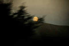 trees holding the moon (wizmo) Tags: moon blur golden moonrise