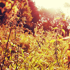 september (fotobananas) Tags: park autumn sun liverpool pen glow olympus september nettles seftonpark ep1 fotobananas