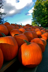 pumpkins (Kadeefoto) Tags: fall pumpkin shelburnefarm farm massachusetts applepicking stowema
